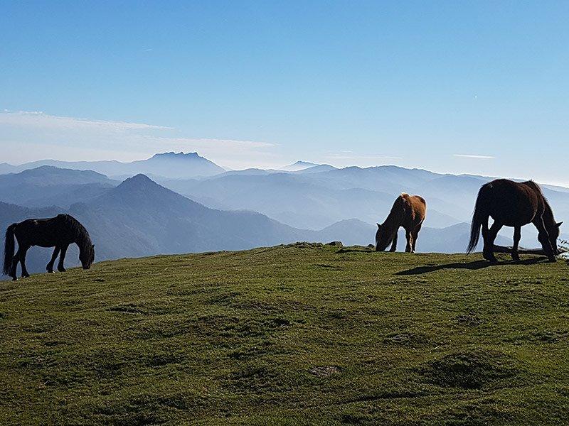 HIKING MOUNT ADARRA