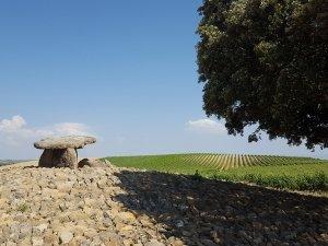 Vineyards of the Rioja Wine Region