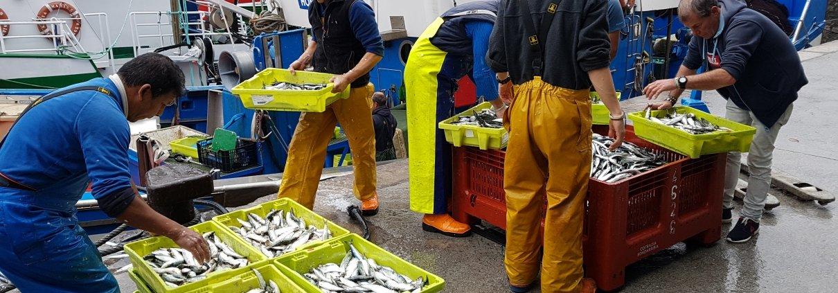 Basque fishermen unloading fish at the port of Hondarribia