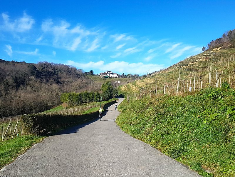 The Camino along Vineyards