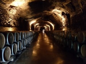 Wine Barrels in an underground tunnel in Rioja